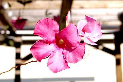 flower-2sm.jpg