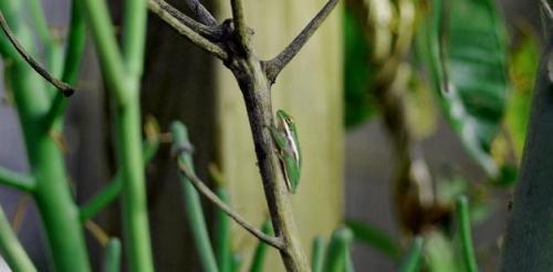 frog-1sm.jpg