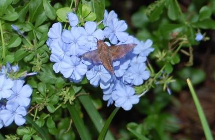 moth-2.jpg