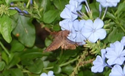 moth-3.jpg