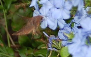 moth-4.jpg