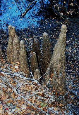 stumps-3.jpg
