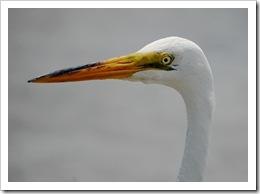 Marina Birds 12