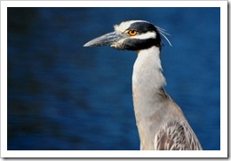 Pond Bird 5