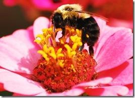 Bee CU