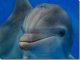 Dolphin CU