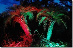Palms xmas